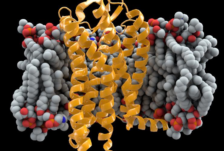 белок CCR5